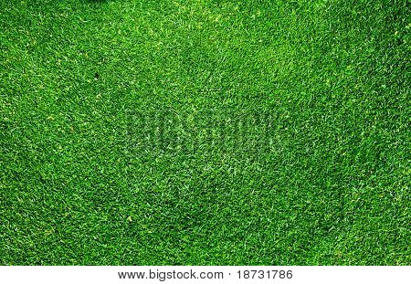 Elevated view of grass
