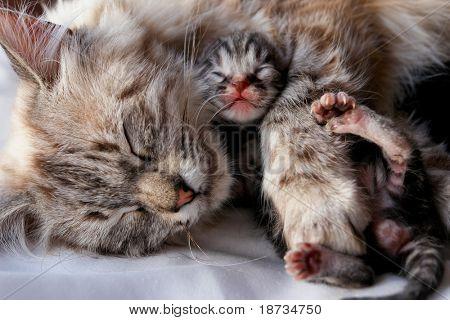Katze und Kätzchen Umarmungen