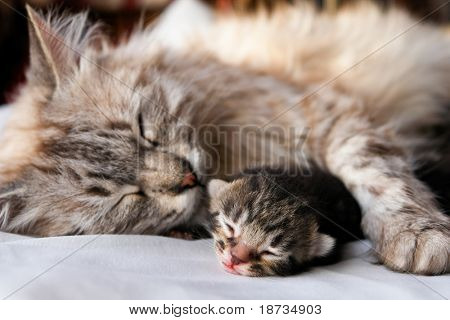 Cat and kitten hug and sleep in compassion