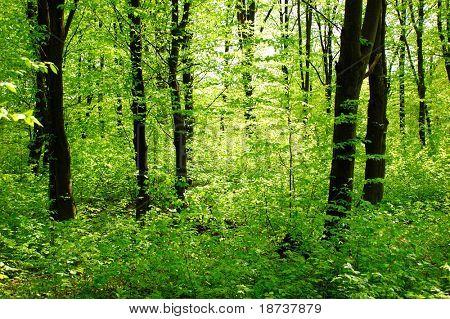 inside of deep spring forest