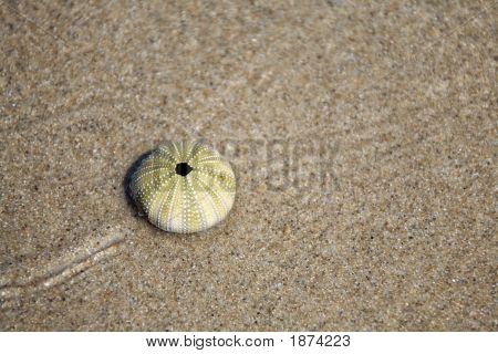 Sea Urchin Skeleton On Beach Sand