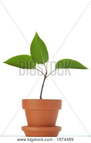 Growth 3