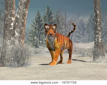 tiger in winter forest