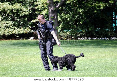 WASHINGTON - April 24: Policeman catches President Obama's First dog Bo, who had escaped and ran towards the south end of the White House South lawn in Washington DC on April 24, 2009.