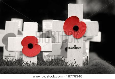 Crosses placed in Remembrance of those who lost their lives during the war. Black and white with red poppies.