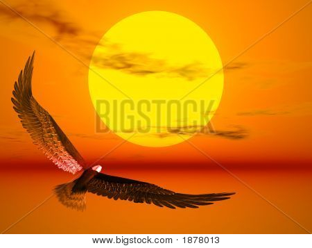 Eagle In The Sunset
