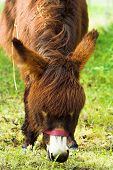 picture of feedlot  - head of a donkey on a farm - JPG