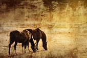horses on grunge background