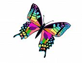 picture of blue butterfly  - Illustration of colorful butterfly created in Adobe photoshop - JPG