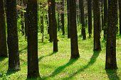 stock photo of nic  - inside forest shot - JPG