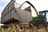 image of sorghum  - Closeup of sorghum harvested and transported in a rusty trailer on a cattle farm in Mato Grosso - JPG