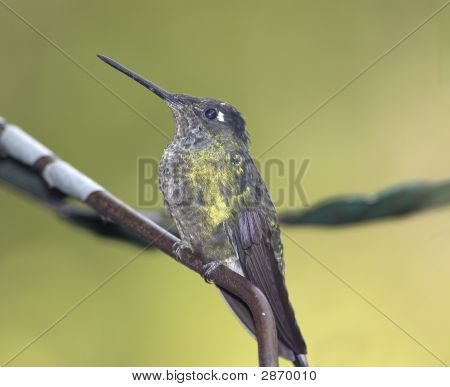 Bird-Hummingbird