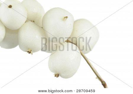 Snowberries (Symphoricarpos Albus)