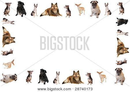 Dog Border Or Frame