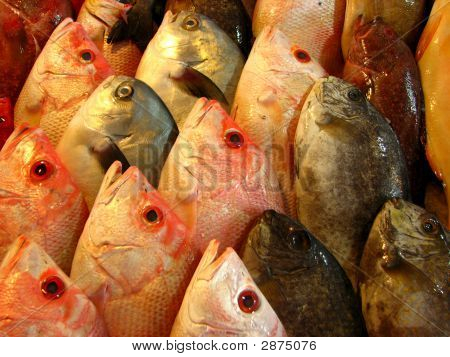 Various Sea Basses Or Grouper Fish