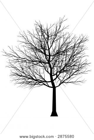 Silueta de árbol