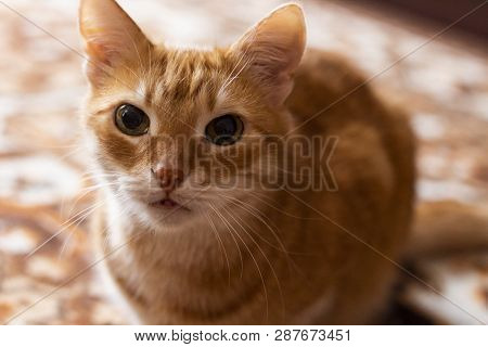 poster of Cat Pictures, Cat Eyes, Cat Eyes, Cute Cat, Cat Pictures, Cat Pictures, Angry Cat, Ready To Play And