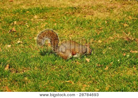 A Squirrel Eating Something