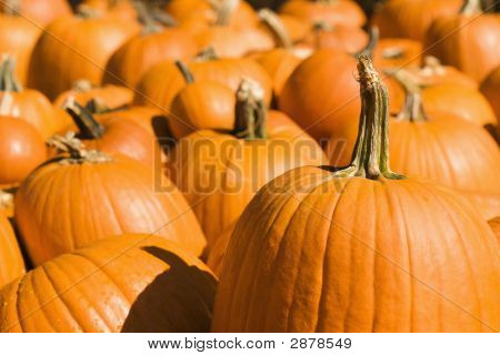 Group Of Pumpkins.
