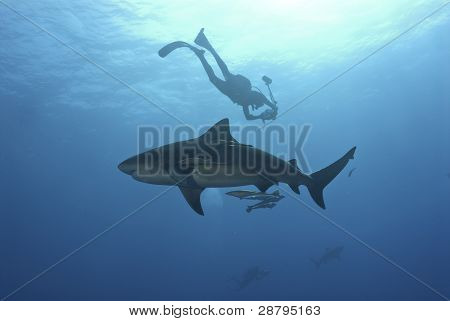 Shark Investigation