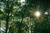Sunrays In The Forest Woods In Summer In England poster