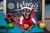 Dog Personal Trainer  Concept . Fitness And Healthy Lifestyle For Pet.   Dog in Sportswear In Trai poster