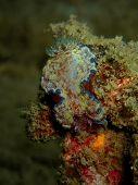Closeup With Nudibranch Glossodoris Cincta. Marine Life, Or Sea Life Or Ocean Life, Is The Plants, A poster