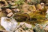 Pond Surrounded By Green Plants In Zoological Park, Barcelona, Spain poster