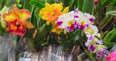 Assorted Fresh Colorful Orchid Flowers Background. Floral Arrangement, Wallpaper, Backdrop, Flower C poster