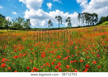 red poppy field dordogne perigord France
