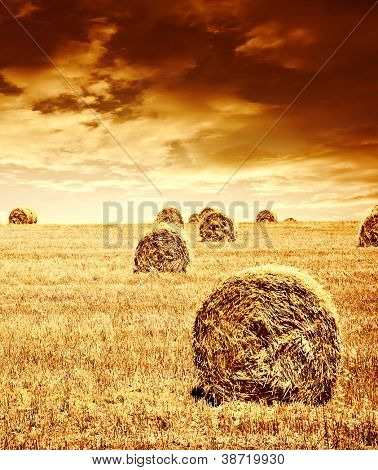 Harvest time of wheat, beautiful sunset, scenic landscape, golden rye field with haystack, season of crop, farm producing food, cultivated organic seeds of bread, beauty of nature in autumn