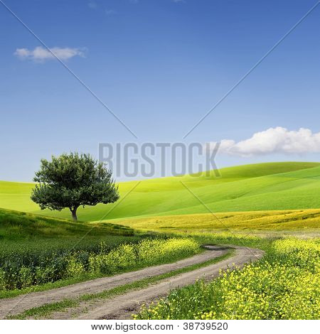 Green Grass Field Landscape with fantastic clouds in the background