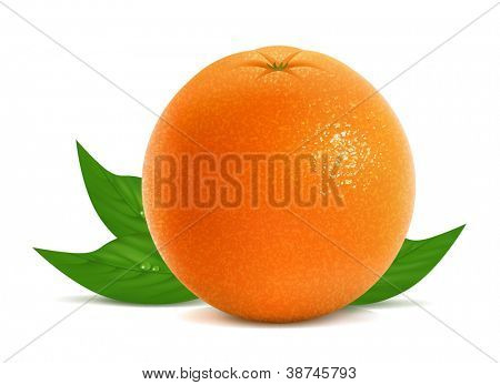 Vector illustration of fresh orange with leaves
