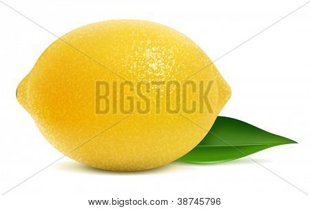 Vector illustration of fresh lemon