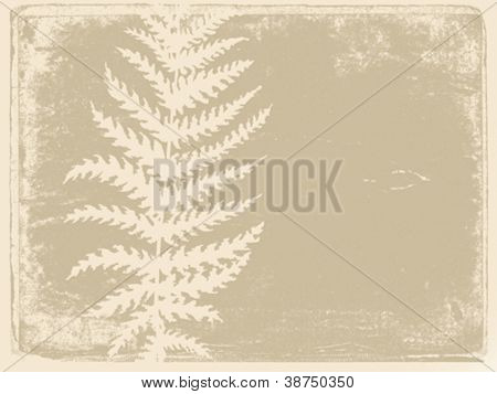 fern silhouette on grunge background, vector illustration