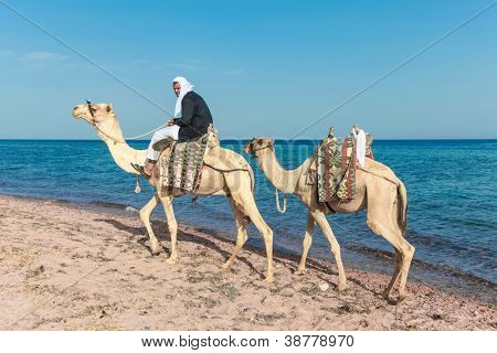 DAHAB, SINAI - JANUARY 29: Unidentified Bedouin man with camels on beach during safari in Dahab, Egypt on January 29, 2011. Local bedouins rely on tourism to make a living in the harsh desert.