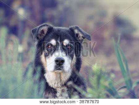 a senior dog looking at the camera