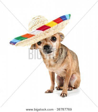 un lindo perrito