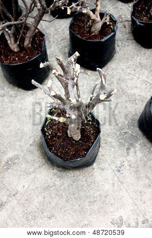 Tree Pruning To Propagation.