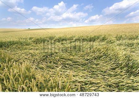 Broken Grain
