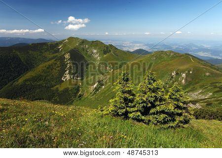 Fatra Mountain Panorama With Flower - Slovakia