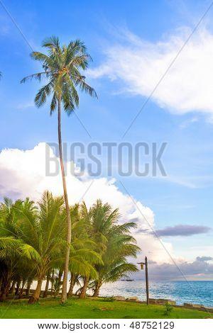 coco tree with bule sky