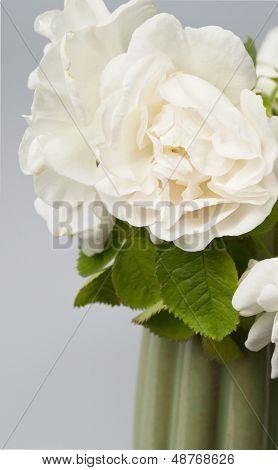 Garden Rose