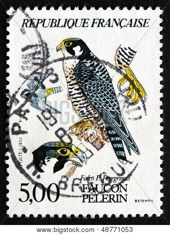 Postage Stamp France 1984 Peregrine Falcon, Bird Of Prey