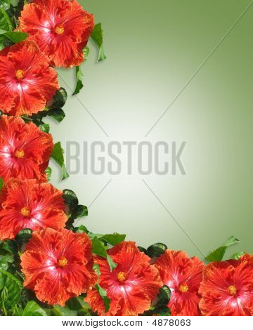 Red Hibiscus Tropical  Border