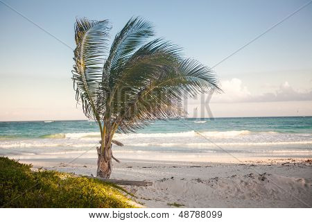 Palmtree On The Exotic Tropical Beach