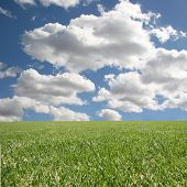 Bright Beautiful Clean Outdoor Grass And Sky Insert Your Isolated Child Or Client poster