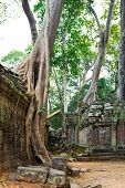 image of raider  - Trees growing into Ta Prohm structure - JPG