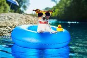 stock photo of floating  - dog on blue air mattress in water refreshing - JPG