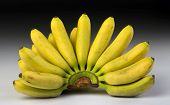 picture of bunch bananas  - Fresh bananas right off the banana tree - JPG